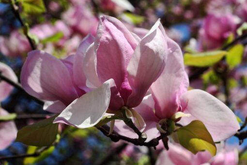 Fotomural Rosas Silvestres