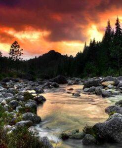 Fotomural Río Bosque