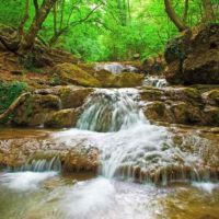 Fotomural Río Bosque2