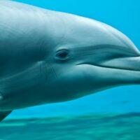 Fotomural Delfin