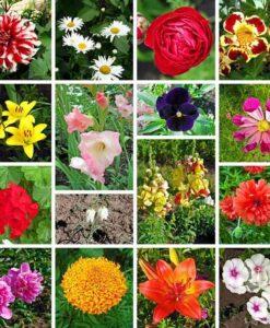 Fotomural Flores Jardín