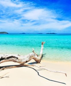 Fotomural Tronco Playa