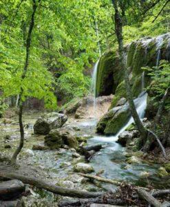 Fotomural Cascada Bosque