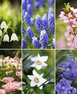 Fotomural Flores Silvestres