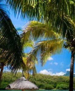Fotomural Playa Palmera2