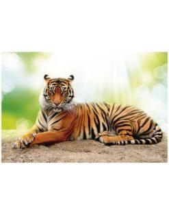 Fotomural Tigre Tumbado