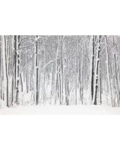 Fotomural Nieve Bosque